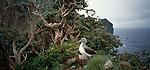 Solander Island. Fiordland National Park. New Zealand.