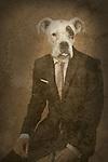 dog dressed as man, fantasy art