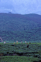 Images from the Book Journey Through Colour and Time, a tea plantation in central Java,Indonesia, women picking tea