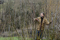 Salix & Hellebores