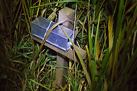 Harvest mouse (Micromys minutus) trap on survey after dark. Surrey, UK.