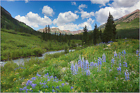 After hiking nearly 10 miles up to West Maroon Pass so I could gain a vew of Maroon Peak, one of Colorado's 14ers, I stopped on the way back to camp to photograph this Colorado wildflower image and the end of Gothic Road. In mid July, the Lupine were blooming on this perfect Colorado morning. Blue skies and green grasses were abundant, and the wildflowers were ready to paint a wide array of colors across the Colorado landscape near Crested Butte.