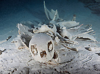 RH0775-D. Green Sea Turtle (Chelonia mydas) skeleton, found inside submerged cavern. This turtle probably entered this underwater chamber, lost its way, and drowned. Sea turtles have lungs and must breathe air. Palau, Pacific Ocean.<br /> Photo Copyright &copy; Brandon Cole. All rights reserved worldwide.  www.brandoncole.com
