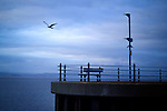 Lone seagull flying over the end of a deserted pier
