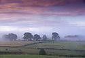 2014_08_15_misty_purple_morning