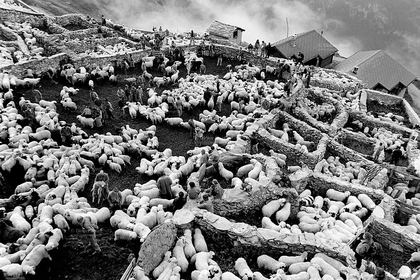 Switzerland. Canton Valais. Belalp. At the end of the season spent by sheeps in mountain pastures, the animals are brought back to Belalp. Each farmer has to look for his own sheep. Stone walls. Swiss alpine farmers. Alps mountains peasants.© 1996 Didier Ruef