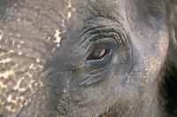 Elephant's Eye - Bali