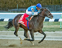 NEW YORK, NY - MARCH 04: J Boys Echo #1, ridden by Robby Albarado, wins the Gotham Stakes on Gotham Stakes Day at Aqueduct Racetrack on March 4, 2017 in the Ozone Park neighborhood of New York, New York. (Photo by Sue Kawczynski/Eclipse Sportswire/Getty Images)