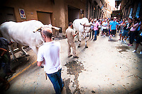 The chariot where the Palio, the prize for the winning contrada, is towed by two large white oxes