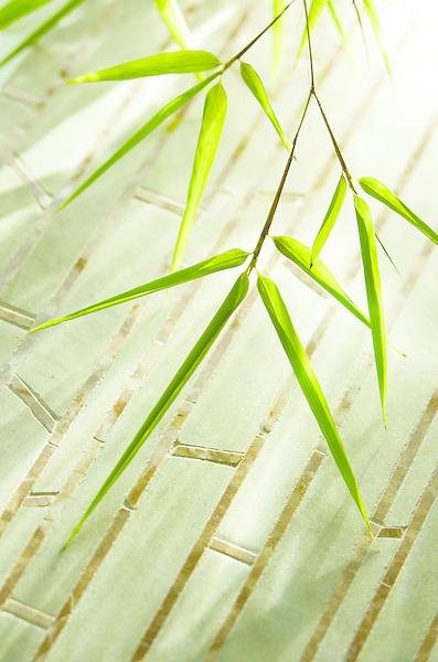 Bamboo in Verde Luna and Emperador Dark