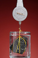 DETERMINING DENSITY OF AN IRREGULAR SOLID (2 of 2)<br />