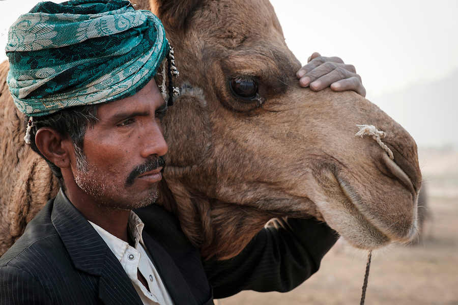 PUSHKAR, INDIA - CIRCA NOVEMBER 2016: Portrait of herder and camel in the Pushkar Camel Fair grounds. It is one of the world's largest camel fairs. Apart from the buying and selling of livestock, it has become an important tourist attraction.
