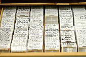 An array of microscope slides about to be examined for any signs of pathology.. Royalty Free