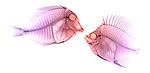 X-ray image of a fish encounter (pink on white) by Jim Wehtje, specialist in x-ray art and design images.