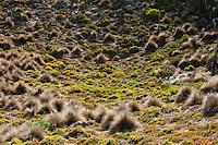 Kangaroo Island coastal plants are hardy and salt-tolerant.