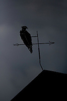 Osprey (Pandion haliaetus) weather vane silhouetted at dusk, Finland