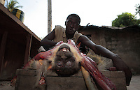 Bushmeat in southern Senegal.  The town of Djiguinoum has about ten hunters that provide meat to the town and surrounding community.  The hunters got a green monkey and there is a photograph of them all lined up... The guy with the monkey hanging off the shotgun is Paulin Coly +221 584 9011... Next in the line (also with gun) is Seydou Sane and the last in the line with no gun is Yaya Sagna.  Green monkeys are said to bury their dead.....Also a few more photographs from the Senevisa shrimp processing factory in Ziguinchor... The guy coming thru the plastic curtains is Nestor Bassene and can be reached at the factory email address:  peca@sentoo.sn..This shrimp factory processes 4.5 tons of shrimp a day brought in from artesinal fishermen...Contacts at Senevisa plant in Ziguinchor are:.Claude Prosper Dieme, head of production prosper@vierasa.sn.and Laurent Sina, Quality Control, lsina@vieirasa.sn..Eduardo Viera SA:  I met Eduardo in Vigo Spain at his headquarters.  He has many fishing and factory operations all over the world including 9 factory ships and two processing plants in Senegal...Anibal Serafin Fernandez Souto is the guy in charge for Eduardo in Senegal.  His mobile is +221 638 5152.Nouveau Quai de Peche.B.P. 1557 Dakar Senegal.+221 889 6868 office.823 6861 fax.senevisa@vieirasa.sn.www.vierasa.sn.home address:.Avda Orillamar.B.P. 1075  36202 Vigo Spain.986 21 32 00 home..Industrialized fishermen pay a license to fish, but then there is no limit for how much they can catch.  The artesenal fishermen are not regulated in any way.  The govt is realizing they have to have some control and banned fishing in November and are opening 5 MPA's...600,000 Senegalese participate in the fishing industry.  When you multiply that number times the 6 or 7 kids they each have and other dependents, you can see that this is a significant percentage of the 12 million Senegalese.  Eighty percent of the fish caught are caught by artesinal fishermen.