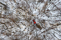 Snow surrounds trees as they are cut down in a forest near Gdynia.
