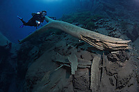 RB7634-D. Scuba diver (model released) swims next to fallen tree in clear waters of Lagoa Misteriosa, a freshwater sinkhole more than 200m deep renowned for cave diving near Jardim, Brazil, South America.<br /> Photo Copyright &copy; Brandon Cole. All rights reserved worldwide.  www.brandoncole.com