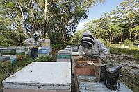 Inspection of the hives. Arriving in 2002, the Aethina Tumida, the Small Hive Beetle, has colonized the whole east coast, Queensland and New South Wales.  The west and the rest of the country as well as Tasmania have been spared thanks to an effective quarantine system between the states, going as far as the prohibition for the beekeepers to transport the hives to the west. The centre of Australis is a desert, a veritable natural barrier. /// Inspection des ruches. Arrivé en 2002 du petit coléoptère Aethina Tumida, le Small Hive Beetle a colonisé toute la côte Est, le Queensland et la nouvelle Galles du Sud. Le reste du pays, l'Ouest est préservé ainsi que la Tasmania par un système de quarantaine efficace entre états, allant jusqu'à l'interdiction de transporter des ruches vers l'ouest pour les apiculteurs. Le centre de l'Australie est un désert, c'est une véritable barrière naturelle.