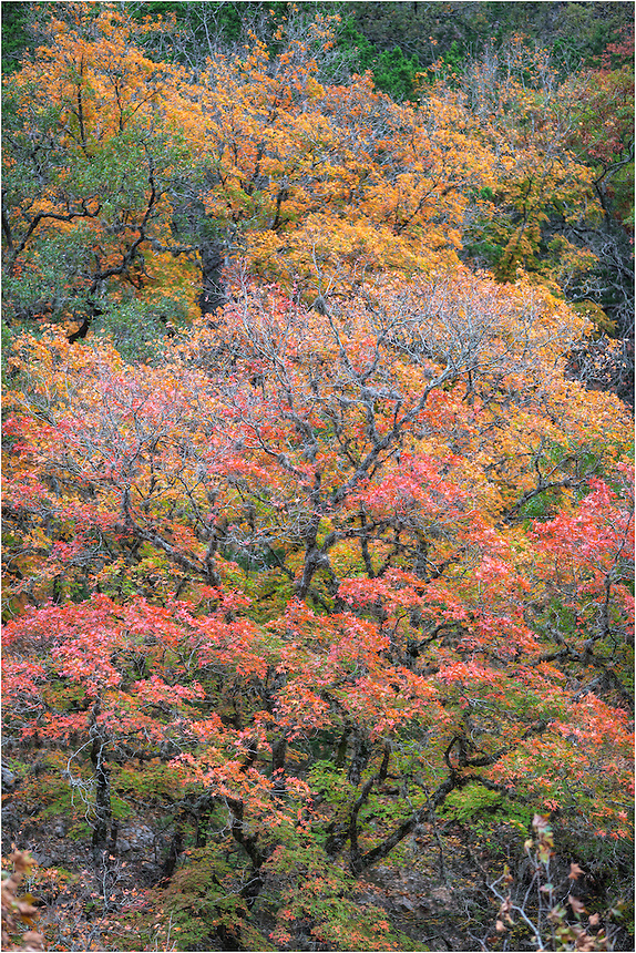 At Lost Maples State Park in the heart of the Texas Hill Country, I was fortunate to capture some photos of the beautiful colors of Autumn found along the Sabinal River.
