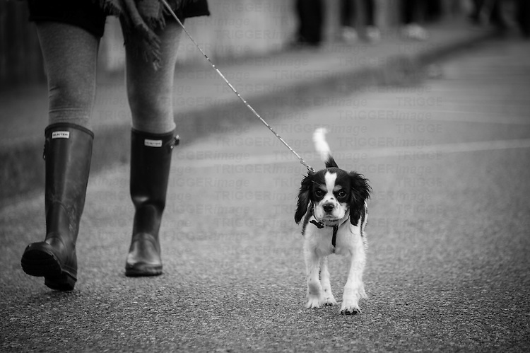 Woman in rubber boots, walking her small dog on a leash.