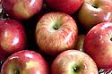 WA09774-00...WASHINGTON - Fuji apples.