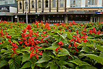 Flowers in Victoria Square, Christchurch, New Zealand
