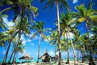 Dominican Republic, Punta Cana, Bavaro Beach. Palm trees Caribbean Sea