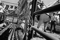 Cowboys prepare for a roping competition at the annual Lincoln Rodeo in Lincoln, MT in June 2006.  The Lincoln Rodeo is an open rodeo, which means competitors need not be a member of a professional rodeo association.