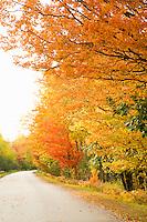 Fall color along a Marquette County road near Big Bay in Michigan's Upper Peninsula.
