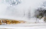 Steam rises from a river in Yellowstone National Park.