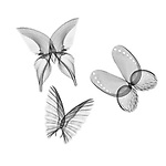 X-ray image of butterflies (black on white) by Jim Wehtje, specialist in x-ray art and design images.
