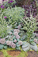 Allium karataviense and Salvia sclarea, purple Heuchera and Allium for a gray silver and purple garden color theme using perennials and ornamental bulbs