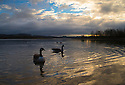 2015_02_25_CARSINGTON_DAWN