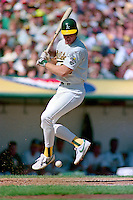 OAKLAND, CA - Mark McGwire of the Oakland Athletics bats during Game 4 of the American League Championship Series against the Boston Red Sox at the Oakland Coliseum in Oakland, California in 1990. Photo by Brad Mangin