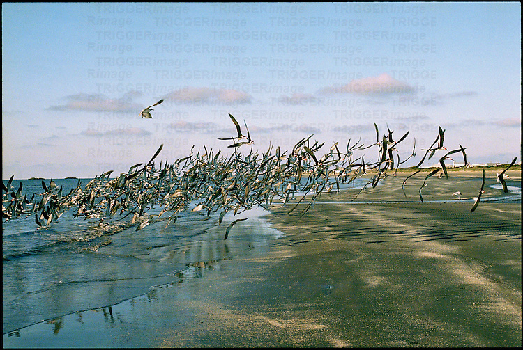 Birds flocking together on a beach