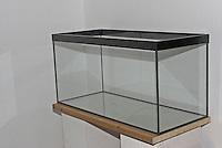 Kinder richten ein Aquarium ein, Schritt 1, Leeres Glasbecken wird auf stabiler Unterlage aufgestellt