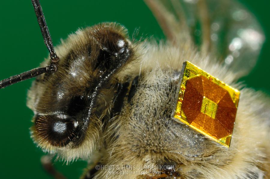 bee with rfid chip on it 39 s back heidi hans juergen koch. Black Bedroom Furniture Sets. Home Design Ideas