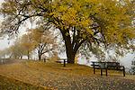 Idaho, North, Coeur d'Alene. A foggy autumn morning on the Centennial Trail east of town.