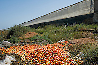 Low quality tomatoes thrown away next to a greenhouse in El Ejido, Spain, 22 May 2007. El Ejido, a dry region on the coast of Andalusia, has changed during the last decades into the centre of vegetable production not only for the Spanish market. A half of Europe is supplied by tomatoes, peppers and melons from El Ejido. This economic miracle is from a major part based on a cheap labor force of illegal immigrants from Maghreb and Subsaharian Africa. Tens of thousands of workers keep the plastic sea of greenhouses running for the minimum wage of 30 Euros a day.
