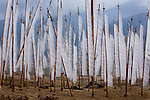 Prayer flags, Paro Valley, Bhutan