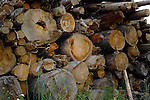 Cut wood piled in the forest, Imst district, Tyrol, Austria.