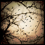 Birds flying together above trees