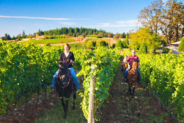 Equestrian Wine Tours Oregon