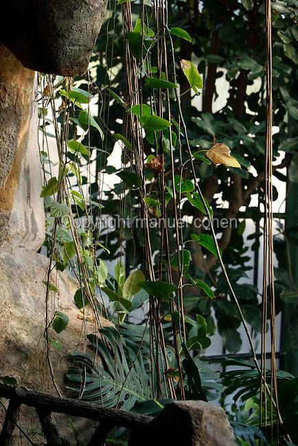 Tropical Rainforest Glasshouse (formerly Le Jardin d'Hiver or Winter Gardens), 1936, René Berger, Jardin des Plantes, Museum National d'Histoire Naturelle, Paris, France. Detail of Epiphytes plants around the entrance to the cave.