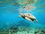 kauai :: underwater (2013)