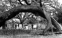 under the oak,Elmwood plantation,ruins