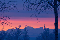 Colorful winter sunrise of orange and pink sky highlights Mt Moffit of the Alaska range mountains.