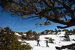 Skiers and Snowboarders enjoying some springtime corn in the Lake Taho backcountry